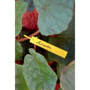 Nortene Tree Label függő címke
