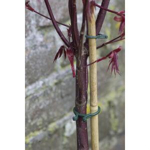 Nortene Vegring könnyen nyíló növénykapocs